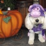 Cavachon wearing a Halloween Costume