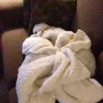 Hidden Cavachon in blanket